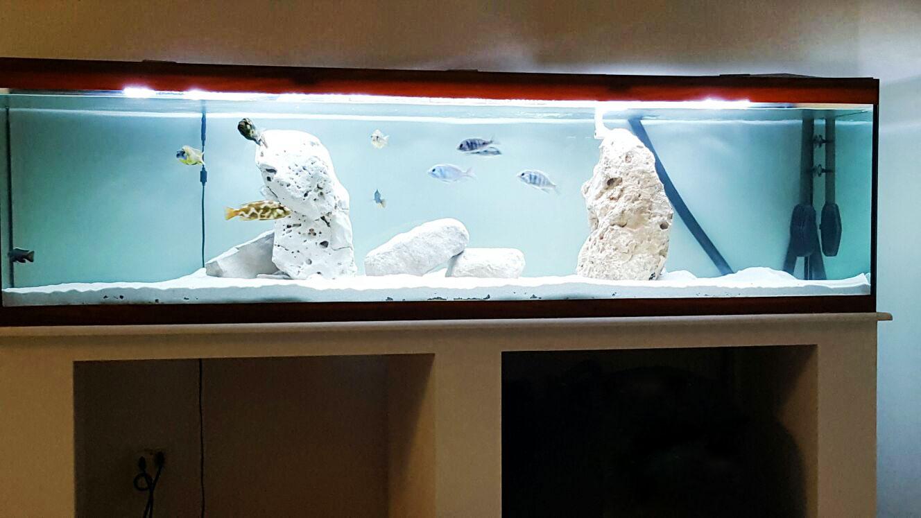 Acquari su misura roma casamia idea di immagine for Acquario tartarughe prezzo