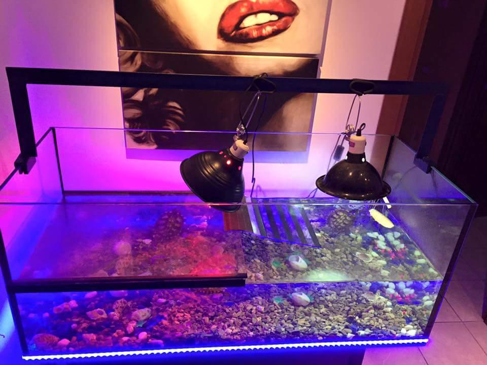 Tartarughiera 4 tartarughe acquatiche animal 39 s house for Tartarughiera